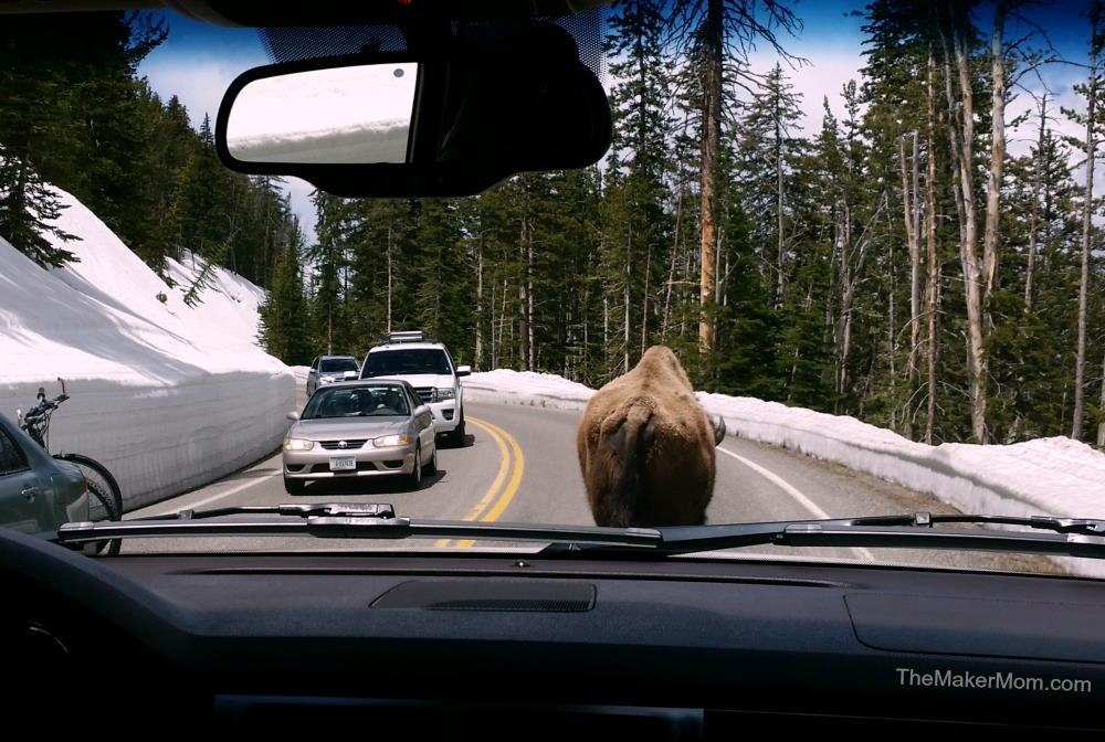 Bison causes traffic jam at Yellowstone National Park